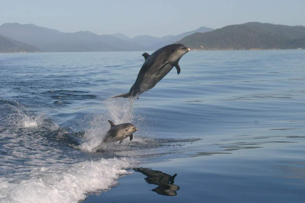Swim with dolphins & wildlife cruises